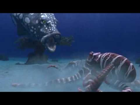 Cadbury - Spots Vs Stripes Funny Commercial (Fish Battle)