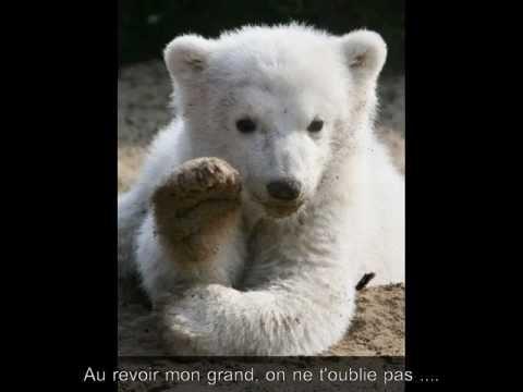 Knut, la victime d'un Zoo ... (видео)