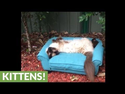 rilassarsi-sul-divano