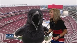 Bird Hilariously Photobombs Meteorologist