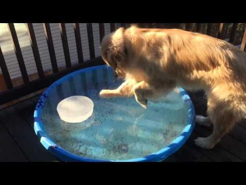 Dog Tries to Fetch Ball from Freezing Pool