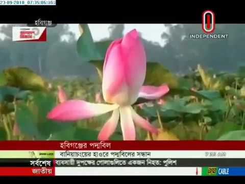 Visitors throng Padma beel in Habiganj to enjoy scenic beauty(23-09-2018) Courtesy: Independent TV