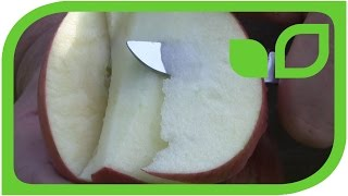 Die Lubera Paradis Apfelneuheit 2015