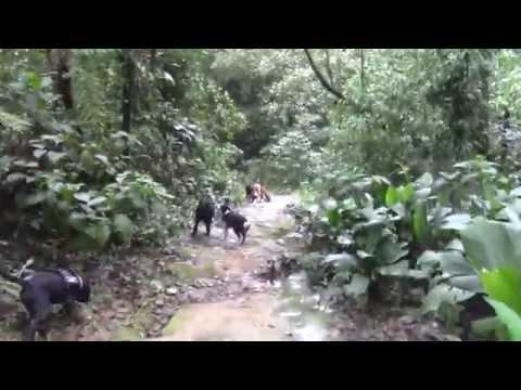 Dogs Part 5: Trilha em Rio Grande da Serra - Aventura com Caes