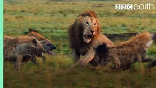 Lion Attacked by Clan of Hyenas - FULL CLIP (with ending) | Dynasties | BBC Earth