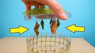 Новые питомцы: куколки Тропических бабочек и Бабочкариум! Посылка из США! alex boyko
