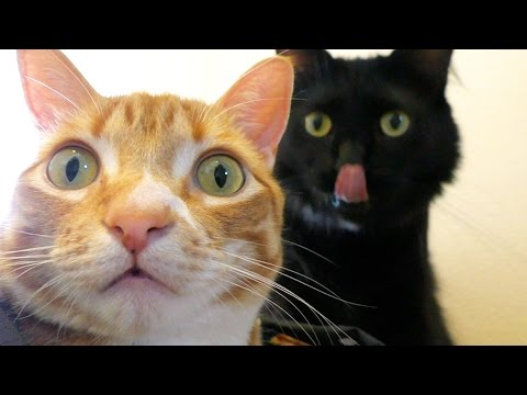 10 Funny Examples of CAT LOGIC_Legjobb vicces vide�k