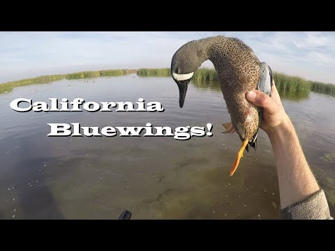 Teal Trifecta! Amazing day on the Refuge! -California Duck Hunting 2017