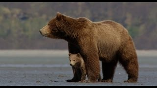 Nonton Disneynature's Bears - Official Trailer Film Subtitle Indonesia Streaming Movie Download