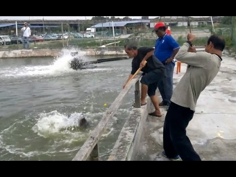 Sau nhiều giờ câu cá tôi đã bắt được một con cá lạ và bán được 3 tỷ