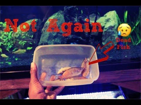 Fish Boiled Alive  Aquarium Heater Malfunction_Akvárium
