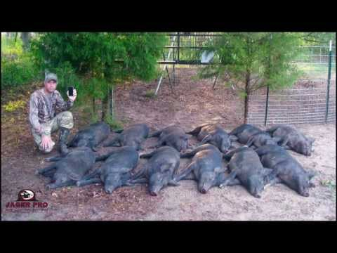 JAGER PRO™ Hog Trapping (14)- 12/12 Success in June Corn