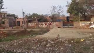 Ambala India  city pictures gallery : India Punjab in Single Video Ludhiana to Ambala Non Stop video HD 1080