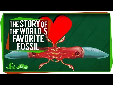 Favorite - What is the world's favorite fossil? Why the orthoceras of course! Hank will tell why that is in this episode of SciShow. Find out how you can get your very ...