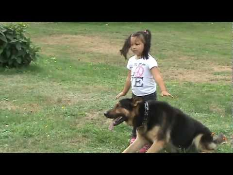 protect - In this video you will see my 4 yr old daughter handling for the 1ST time him in protection. The dog is extremely hard and civil and it is the first time wor...