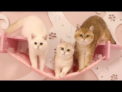 Als katten een huis mochten kiezen
