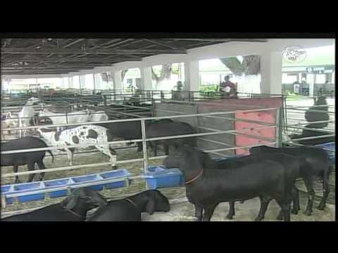 CN Notícias: Exposição de ovinos e caprinos movimenta produtores em Aracaju