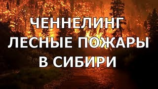 Послание от Духа Планеты о лесных пожарах в Сибири 2019. Голосовой ченнелинг.