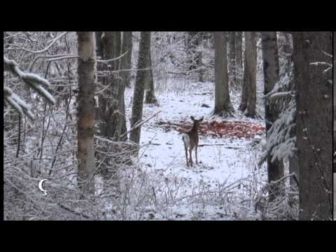 Chasse au chevreuil en Outaouais – Un beau 10 pointes