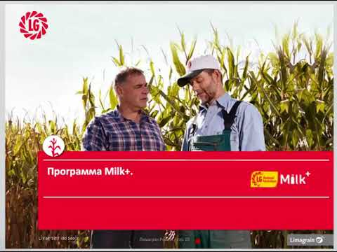 Оценка питательности кукурузного силоса и производство молока на единицу площади