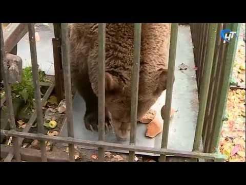 Медведица Маша оказалась брошена на произвол судьбы