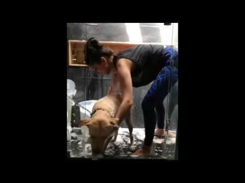 Video Sunny Leone in Bathroom with her dog Bella _ sunny _ bathing_HD download in MP3, 3GP, MP4, WEBM, AVI, FLV January 2017