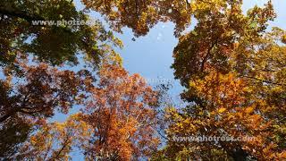 紅葉の動画素材, 4K写真素材