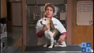 Protecting Your Dog from Fleas and Ticks
