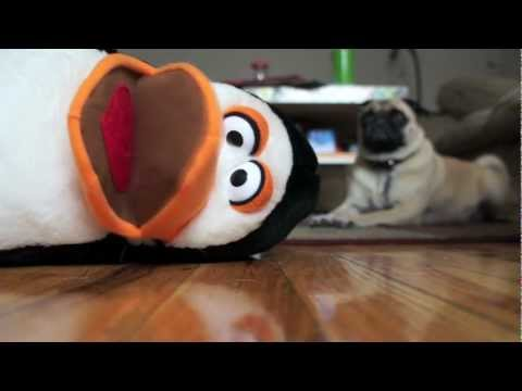 Confessions Of A Dog Toy