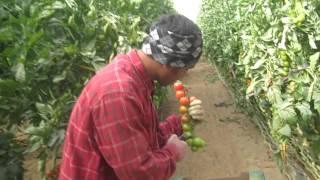 Video Nepali agriculture training student in Israel(RNITCAA). MP3, 3GP, MP4, WEBM, AVI, FLV November 2018