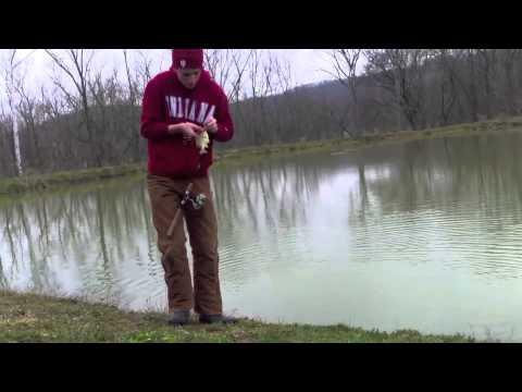 Sight Fishing Bluegill