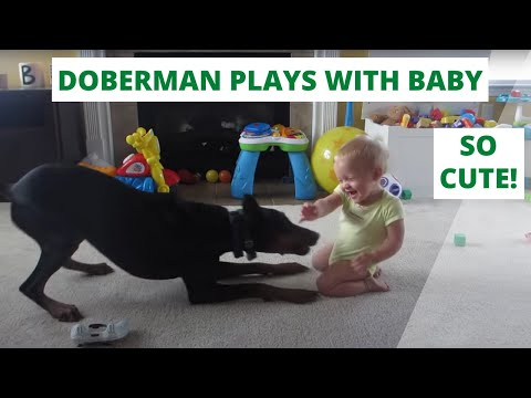 doberman playing with baby