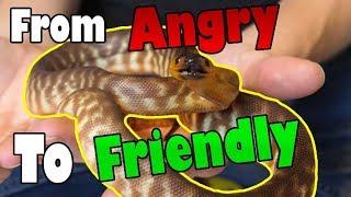 "Video How to Tame an ""Aggressive"" Snake MP3, 3GP, MP4, WEBM, AVI, FLV Maret 2019"