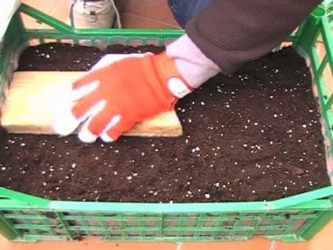 coltivare gli ortaggi su una cassetta da frutta