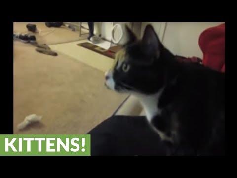 العرب اليوم - شاهد: قطة تلجأ إلى الثلاجة للهروب من ارتفاع درجات الحرارة