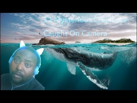 12 Mysterious Underwater Creatures Caught On Tape Part 2 (Reaction)