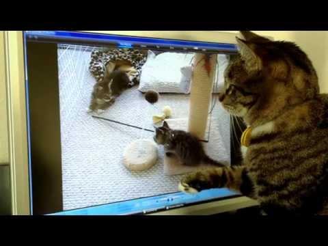 kotka-mysli-ze-kocieta-sa-prawdziwe-i-szuka-ich-kiedy-gasnie-ekran