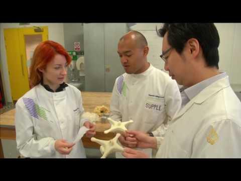 تصنيع مواد عازلة للحرارة من ريش الدجاج