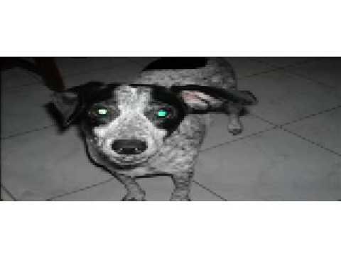 La Confederación General de Perros Peronistas lanzó un comunicado