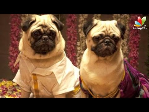 Dogs-love-story-for-the-first-time-in-Tamil-Cinema-Naaikuttypadam-Nithin-Sathya-Sruthi