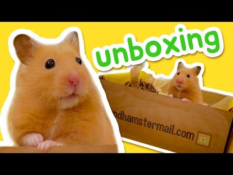 Hamster Mail Unboxing 🐹📦