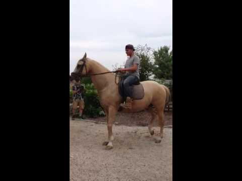 Blaze dancing stallion at Baiting Hollow Farm Vineyard