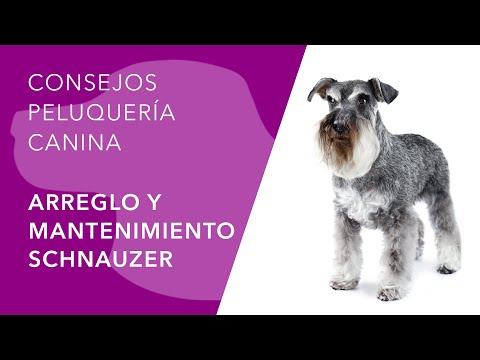 Peluquería Canina - Schnauzer