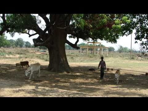Tree Shade Therapy for Epilepsy. Part-1 © Pankaj Oudhia