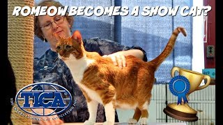 ENTERING A CAT SHOW WITH MY SENIOR RESCUE CAT?! | TICA Cat Show | Columbus, Ohio by Maddie Smith