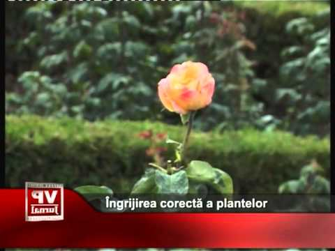 Îngrijirea corectă a plantelor