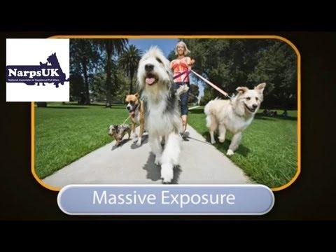 NarpsUK www.narpsuk.co.uk: help and advice for pet sitting and dog walking