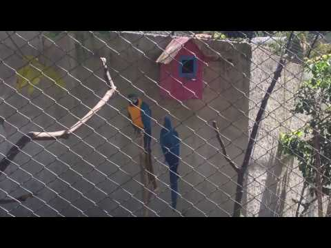 Eduarda no Zoo Park da Montanha em Marechal Floriano (Part. 6) - 10.01.2017