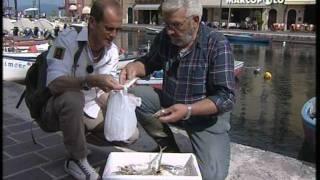 Garda, Lazise, Punta San Vigilio, Valeggio, Isola della Scala, Erbè (2 parte)