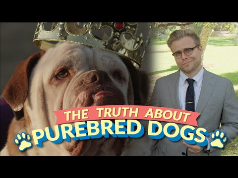 Better - Watch more Adam Ruins Everything here: https://www.youtube.com/playlist?list=PLuKg-WhduhkksJoqkj9aJEnN7v0mx8yxC For more information regarding the truth about purebreds, watch the BBC documentary...